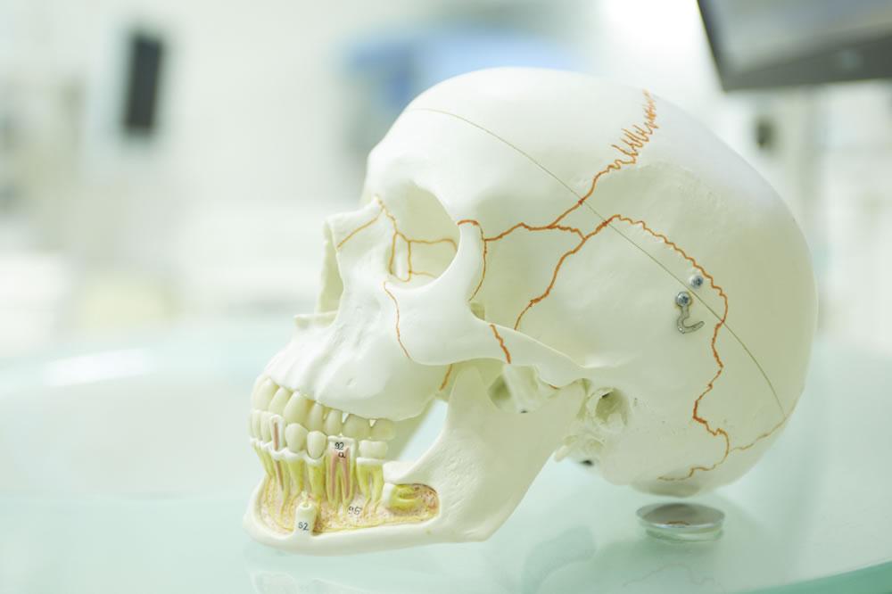 顎骨の発育